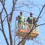 В Тирасполе начались весенние работы по озеленению