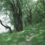 Свыше 150 гектаров леса будет высажено в Приднестровье