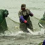 На Днестре разрешили промысловый лов рыбы