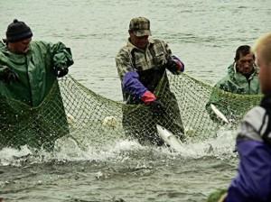 promyslovyy_lov_ryby_dnestr