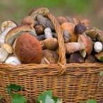 В Приднестровье запрещена торговля дикорастущих грибов