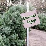 В Приднестровье заработали елочные базары