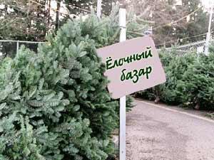 elocinii-bazar