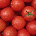 Приднестровские селекционеры выводят новые сорта томатов
