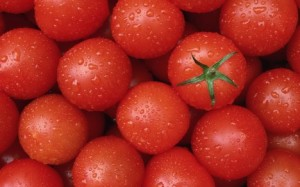 gibrid-pomidori-tiras