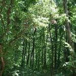 В Приднестровье будут восстанавливать леса