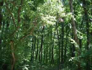 Forest_ialoveni