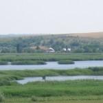 В Кучурганский лиман выпустили мальков судака