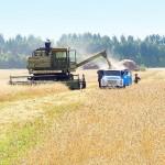 К уборке зерновых приступили в Рыбницком районе