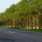 Из-за пожара на трассе «Тирасполь-Каменка» пострадали деревья