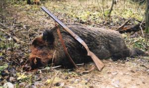 В Приднестровье стартовал сезон спортивной охоты на кабана