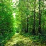 В Приднестровье разработают программу по созданию больших лесных массивов