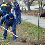 Акция «Посади свое дерево» прошло в Дубоссарах