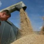 Свыше 127 тысяч тонн зерна собрали в Григориопольском районе