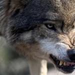 В Каменском районе начался отстрел бродячих собак