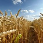 Свыше 90% земель сельхозназначения обрабатываются в ПМР