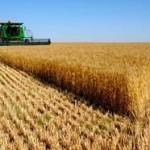 В Приднестровье уже собрали 13,2 тысячи тонн озимой пшеницы