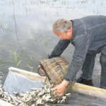 В водоемы ПМР выпущено свыше 44,1 тонн малька