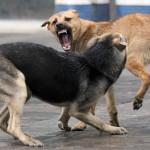 В Бендерах бродячие собаки кусают людей