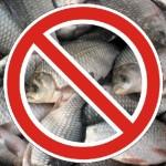 Запрет на ловлю рыбы 2016 в ПМР