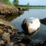 Так и не найдена причина гибели рыбы на Дубоссарском водохранилище