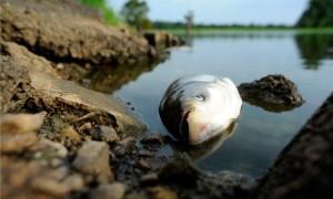 ryba-dubossari