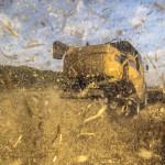 В этом году ПМР ждет хороший урожай зерновых