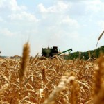 Аграрии ПМР собрали рекордный урожай зерна