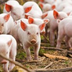 В ПМР запрещен ввоз продуктов животного происхождения из РМ