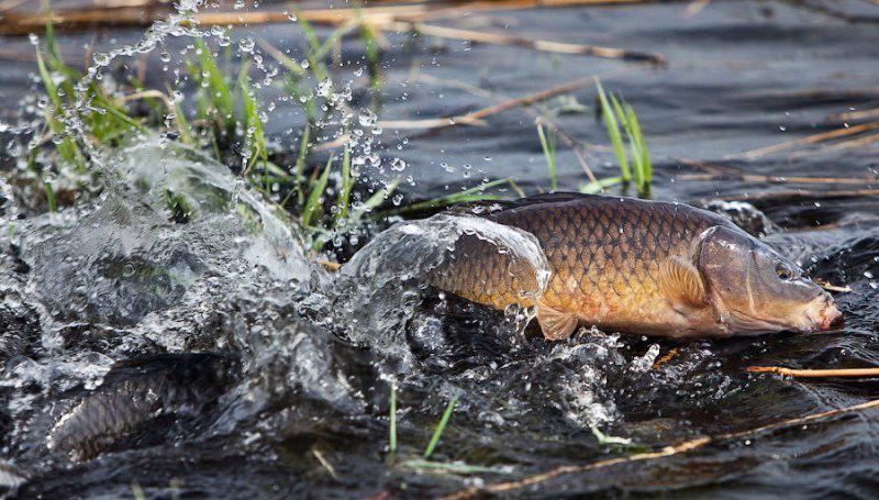 запрет на рыбную ловлю оренбург